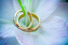 Rings on flower Stock Images