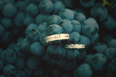 Rings in the grapes Stock Photography