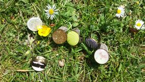 Rings on the Grass. Handmade rings with different images on the grass with white and yellow flowers Stock Image