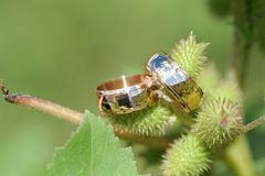 Rings on Green Plant Stock Photos