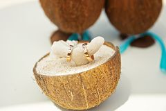 Rings on the coral in coconuts in the sand. stock images