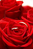 Rings inside of Red Rose Royalty Free Stock Image
