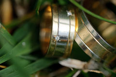 Rings in Leaves Royalty Free Stock Images
