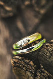 Rings lie on the tree Stock Photography