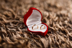 Rings for newlyweds Stock Photo
