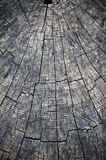 Rings in old dried tree stump Royalty Free Stock Images
