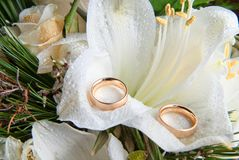 Rings on orchid Stock Images