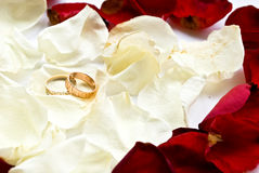 Rings and petals Royalty Free Stock Image