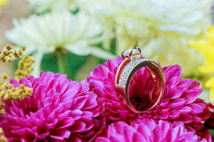 Rings pink dahlias love Valentine& x27;s Day Tinted  and softened - diamond wedding Royalty Free Stock Photo