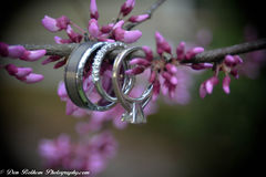 Rings. On a purple branch with flowers Royalty Free Stock Image