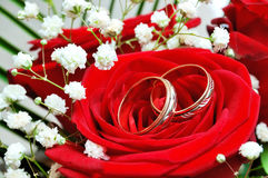 Rings on red rose Stock Images