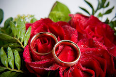 Rings on rose Royalty Free Stock Image