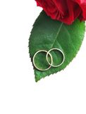 Rings with rose Stock Image
