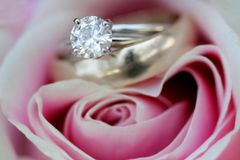 Rings and rose. Diamond wedding rings inside a pink rose Stock Photo