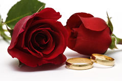 Rings and roses. Stock Image