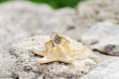 Rings and Sea Star Stock Photo