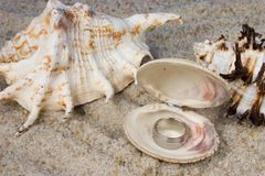 Rings in Seashell. In sand Royalty Free Stock Image