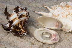 Rings in Seashell. In sand Stock Photography