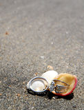 Rings in shells on sand Royalty Free Stock Photos