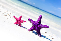 Rings on starfishes in tropic paradise. Wedding Vacation concept Royalty Free Stock Images