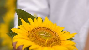Rings on a sunflower. Wedding rings on a beautiful yellow sunflower in a hand stock video footage