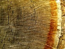 Rings of Tree Bark royalty free stock image
