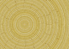 Rings of tree cut wood texture backgrounds. Rings of tree cut wood texture background Vector Illustration