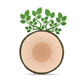 Rings of Tree and Green Leafs. Color Vector Illustration. Royalty Free Stock Photos
