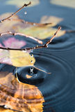 Rings on water surface Royalty Free Stock Photo