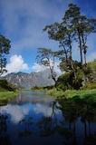 Rinjani mountain crater. Rindjani volcano lake with trees, mountains and clouds reflection Stock Image