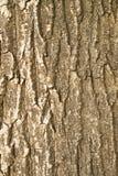 Rinkd dell'albero Fotografie Stock Libere da Diritti