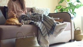 Rinking te eller kaffe för kvinna Lat dag med katten p? soffan Mysig plats stock video
