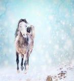 Rinnande häst i snö, vinterlandskap Royaltyfria Foton