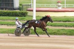 Rinnande häst med ryttaren på racerbana Royaltyfri Bild