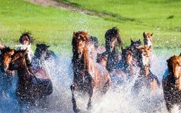Rinnande hästar Arkivfoto