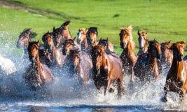 Rinnande hästar Royaltyfri Bild
