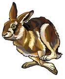 Rinnande hare royaltyfri illustrationer