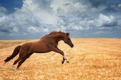 Rinnande häst Royaltyfria Bilder