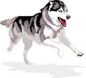Rinnande hund Royaltyfri Bild