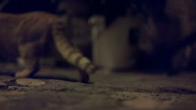 Rinnande katt som bort skrämmas av något och lager videofilmer