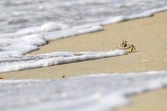 Rinnande krabba bort Royaltyfria Bilder