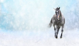 Rinnande svart häst i snö, vinterbaner Arkivbilder