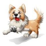 Rinnande valp av en hund Arkivbilder