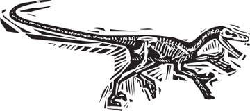 Rinnande Velociraptorfossil Arkivfoto
