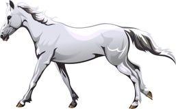 rinnande vit häst Royaltyfri Illustrationer