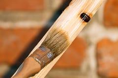 Rinnovamento del legno Fotografie Stock