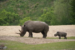 Rino and Young. In the zoo stock photo