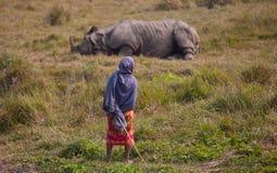 Rinoceronte Fotografia Stock Libera da Diritti
