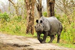Rinoceronte Fotos de Stock Royalty Free