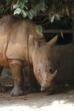 Rinoceronte 2 fotografía de archivo